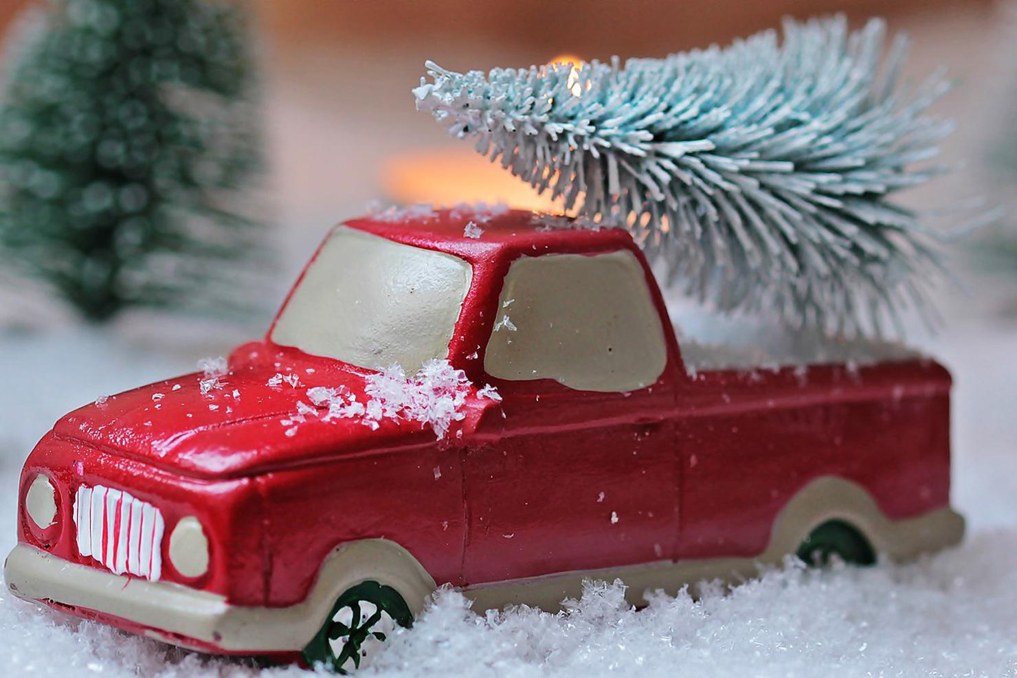 """Weihnachtsbäume im Topf mieten """"Rent a Christmas Tree"""""""